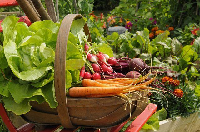 Сбор урожая и работы в сентябре